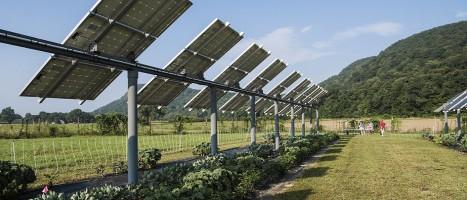 Καλλιέργειες υπό την σκιά φωτοβολταϊκών πλαισίων: Πλεονεκτήματα...